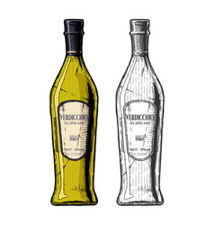 verdicchio dry white wine vector image
