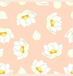 White indian lotus on light pink background vector