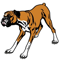 boxer dog vector image vector image