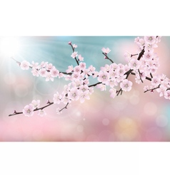 blossom cherry tree branch vector image