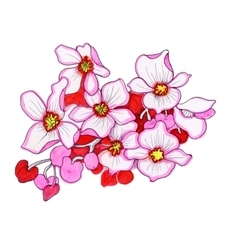 Colorful pink flowers watercolor vector image