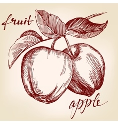 Apples on apple tree branch fruit hand drawn vector