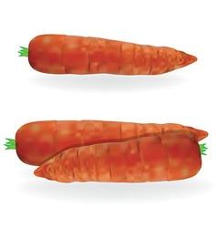 Carrot food vector