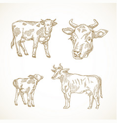 Cow bull and calf hand drawn vector