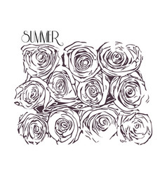 monochrome of roses vector image