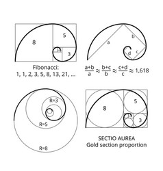 Golden fibonacci ratio spirals gold section vector