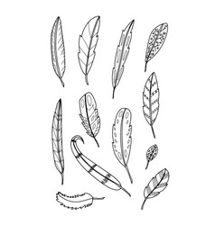 set of feather on white background vector image