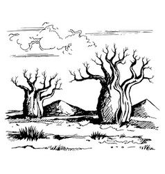australia landscape with baobab trees vector image vector image