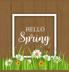 Hello spring greeting card with blooming chamomile vector