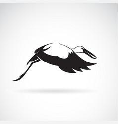 stork flying on white background asian openbill vector image