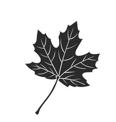 maple leaf icon vector image