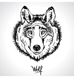 wolf drawing vector image