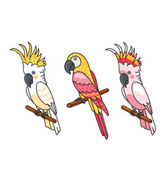 yellow and pink cockatoos macow cute tropical vector image