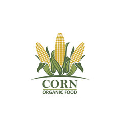 Corn vegetable emblem vector
