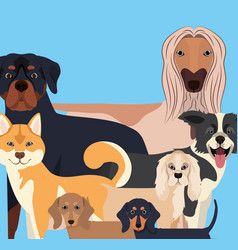 Group dogs pets characters vector