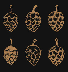 set of beer hop vector image