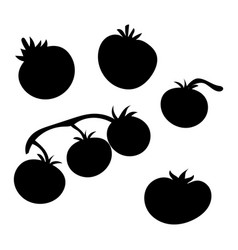 set silhouettes tomatoes collection vector image