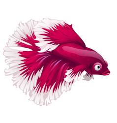 Cartoon pink betta fish siamese fighting fish vector
