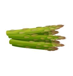 Fresh green asparagus spears vector