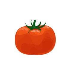 ripe fresh tomato cartoon vector image