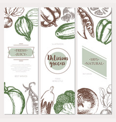 vegetables - color hand drawn square flyers set vector image