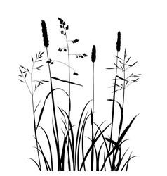 wild cereal plants vector image