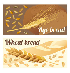 rye and wheat bread vector image