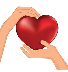 heart inside hands vector image