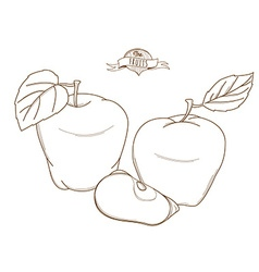 Outline hand drawn apple flat style thin l vector image