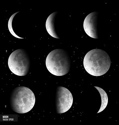 set of moon phases vector image