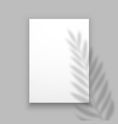 shadow plant overlay palm leaf effect on paper vector image