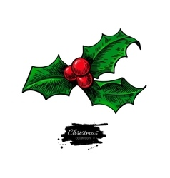 Christmas mistletoe holly berry with leaves Hand vector image vector image