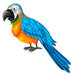 Parrot with yellow and blue feather vector image vector image