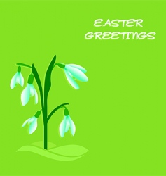 easter snowdrops vector image