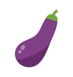 Eggplant or aubergine vegetable isolated vector