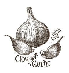 Garlic logo design template fresh vector