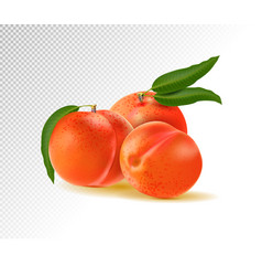 Peaches with leaves isolated on transparent vector