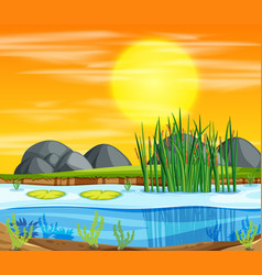 Sunset pond background scene vector
