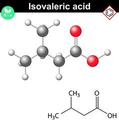 Isovaleric acid molecule vector image