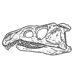 Archosaurus rossicus fossilized skull hand drawn vector