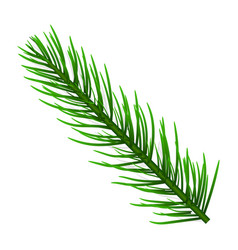 fir tree branch icon realistic style vector image