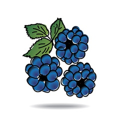 freehand drawing dewberry icon vector image