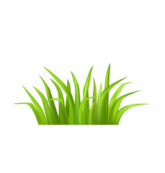 green grass isolated on white vector image