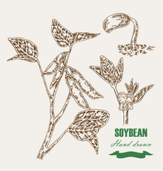 Hand drawn soy plant soy twig and soybean vector