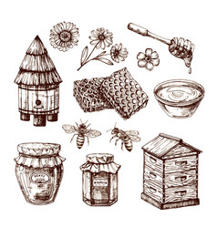 Honey sketch bee and honeyed flower honeycomb vector