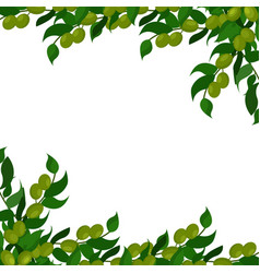 olive branches background vector image