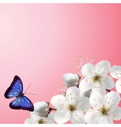 Cherry Blossoms On A Pink Background vector image