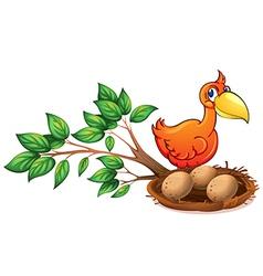 An orange bird watching the eggs vector image