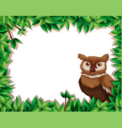 Owl on nature frame vector