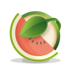 watermelon vegan food fresh vector image